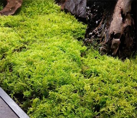 Moss in a Terrarium