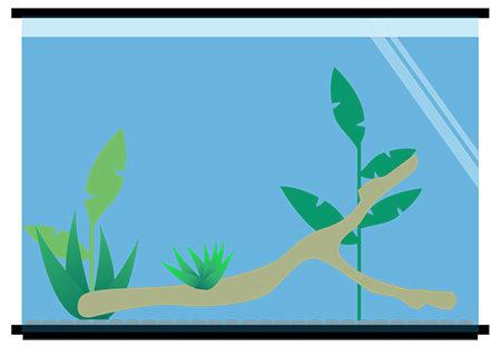 Aquatic Frog Tank