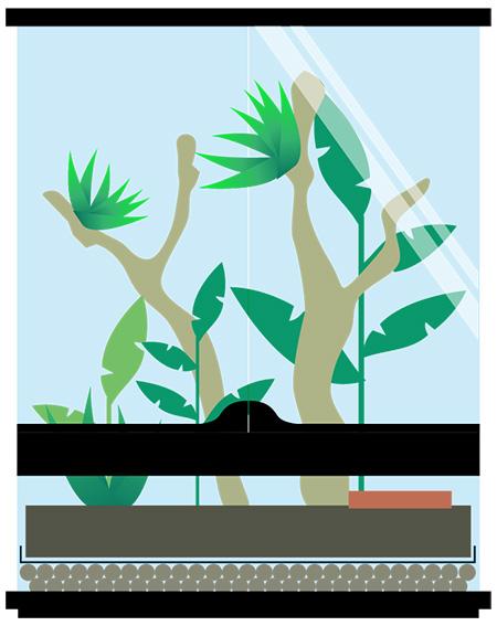 Arboreal Frog Terrarium
