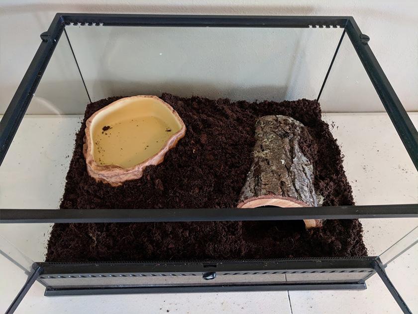Terrarium with Hollow Log & Water Dish