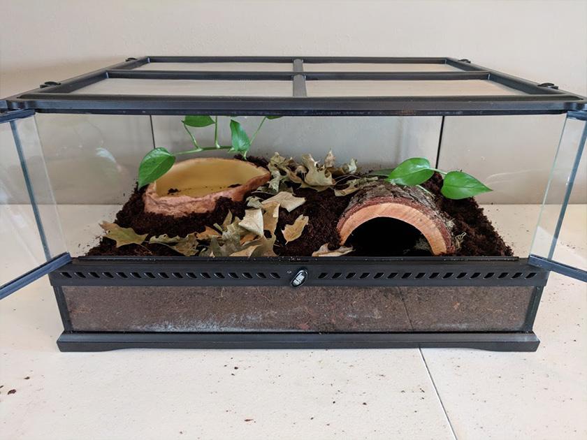 Terrestrial Frog Terrarium Setup