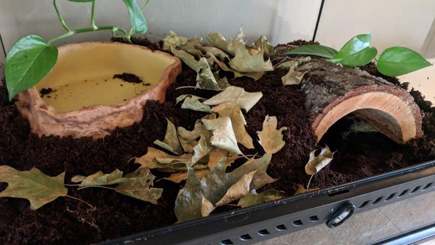 How To Set Up A Terrestrial Frog Enclosure Frog Pets