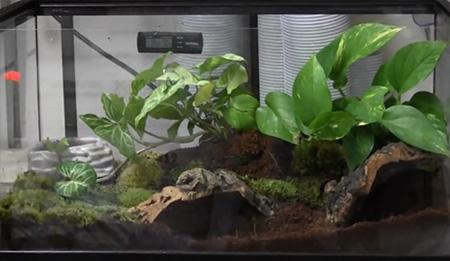 Tomato Frog Cage Setup
