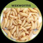 Waxworms