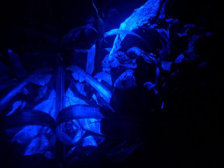 Exo Terra Night LED