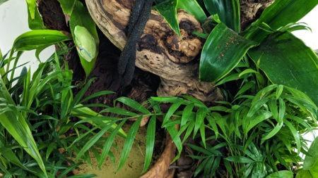 Tree Frog Terrarium